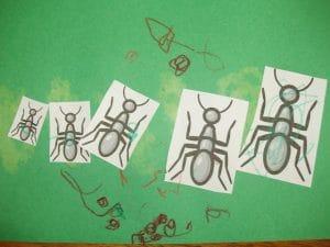 ant sizing